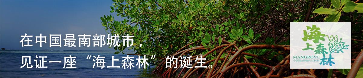 海上森林筹款